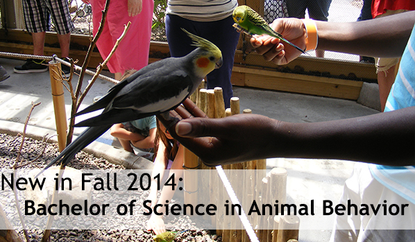 CISAB is now pleased to offer students a Bachelor of Science in Animal Behavior!